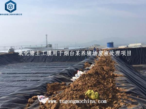 氧化塘土工膜用于烟台某养猪场废液处理项目