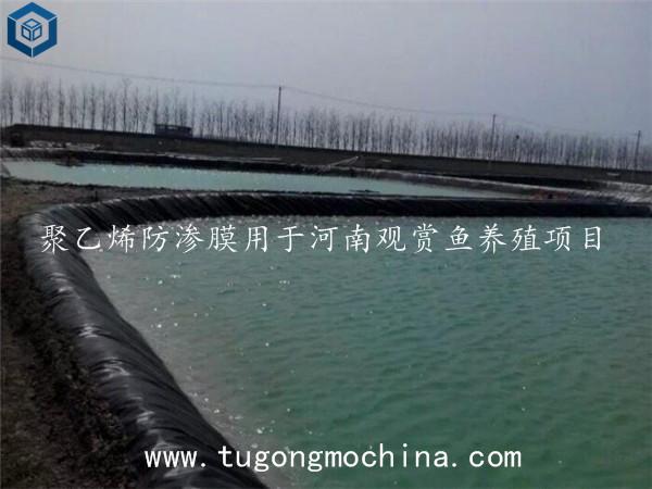 防渗膜用于河南观赏鱼养殖项目