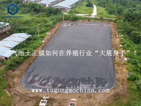 """沼气池土工膜如何在养殖行业""""大展身手""""?"""